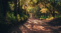 STF retoma hoje a votação das Ações Diretas de Inconstitucionalidade do novo Código Florestal
